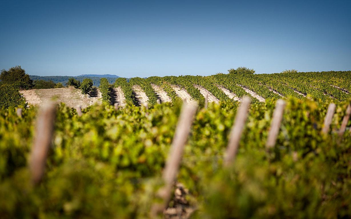 domaine de fontenille vin bio